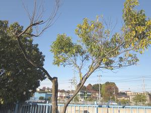 Gairoju3_06